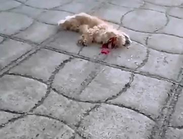 Dog Heart still Beating outside of the Little Guy's Chest