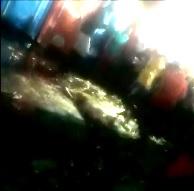Man was Beaten to Death outside a Porta-Potty (Info in Description)