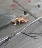 Pitbull Attacks a Helpless Man (New Angle)