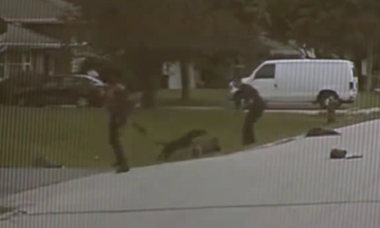 Dashcam Shows Pitbull Attack