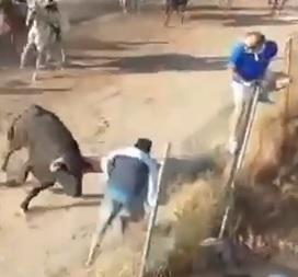 Bull Wins Bigly