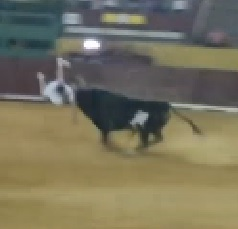 Bull Turns White Shirt Dude into Human Ragdoll