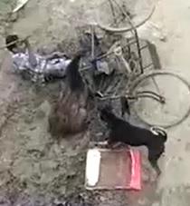 DAMN! Wild Boar Attacks and Eats Man