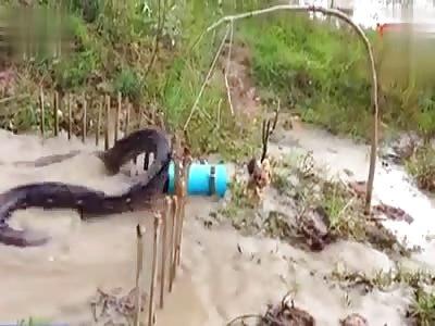 Trap Anaconda in Brazil