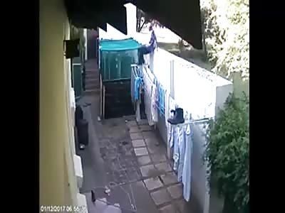 Thief vs dogs