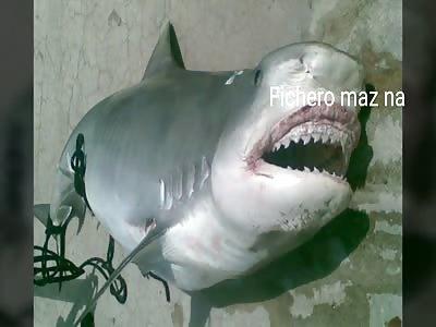 BEAUTIFUL: man eaten by shark