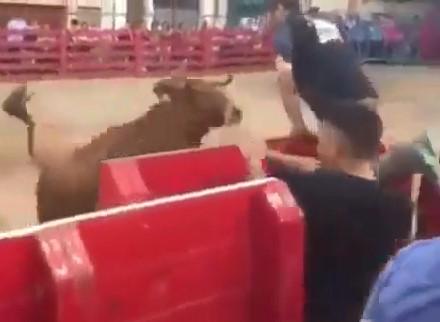 Bull Fucks Man's Day Up !