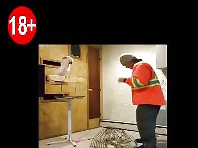 Funny 18+ | The Parrot curses its Boss