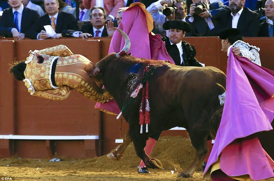 Man sodomized by Bull. (New)