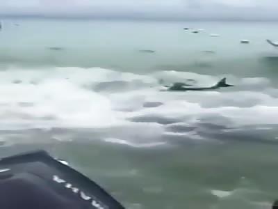 Fisherman throws tuna to sharks, saw what happened