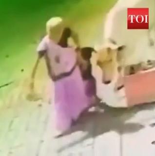 Mad Cow Attacks Grandma