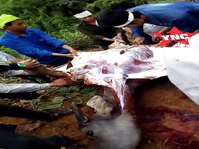 how jungle peasants eat in  laos