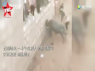 bull accident in Yunnan