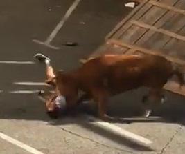 Good Bull