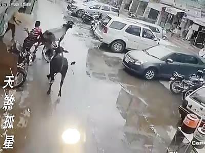 Good Bulls.....