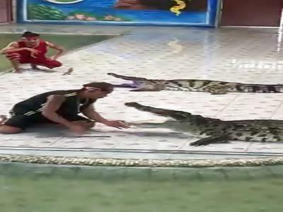 Good Croc.....