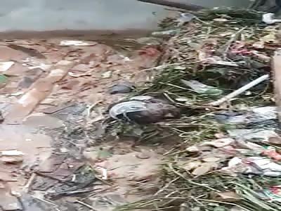 Rotting Body