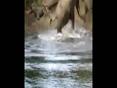 Elephant Attacks