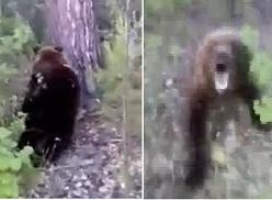 Moronic Idiot Walks up on Bear.. Pays the Price