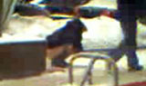 DUMB BITCH: Purse stolen while pissing in public