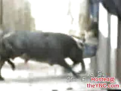 Bull gores a Woman