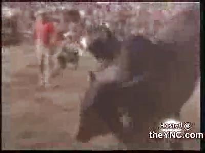 Hunchback Bull Goes Crazy