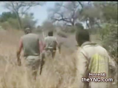 Hunting Huge Elephants with a 700 Nitro Rifle