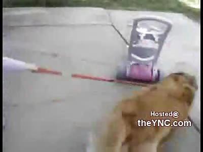 LMFAO: Huge Dog Pulls Little Girl and Cracks Her Face Open