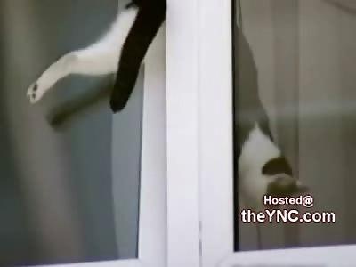 HAHAHA: Curious Cat Stuck in a Window.