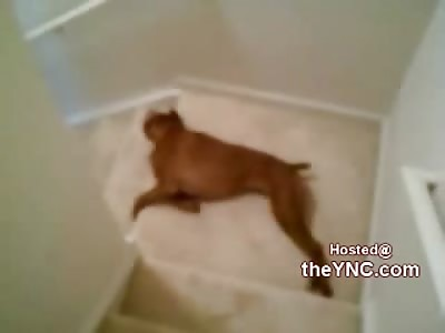 LOLOLOL: Boxers Hilarious Morning Ritual