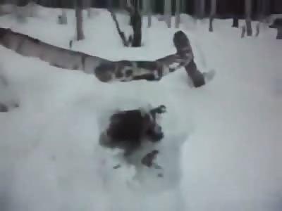 An Allegded Dead Alien found in the Snow in Siberia