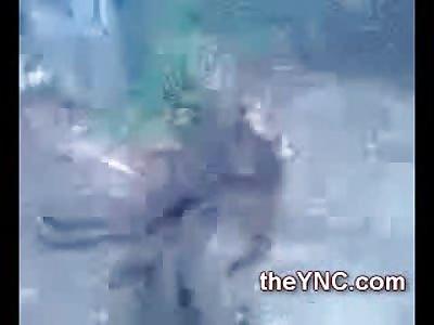 Bizarre 3 Legged Stillborn Elephant....