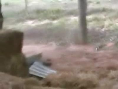 Assholes Shoot a Pig From Behind and Dog Attacks it