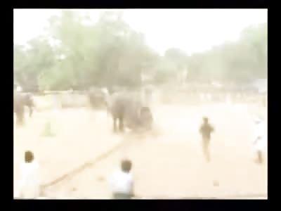 Elephant goes Berserk using Man as his own Stuffed Animal Killing him in the Process