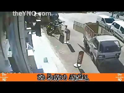 Boy is Fatally Struck by Trucks Unlatched Gate that Flies Open Hitting Him in the Head