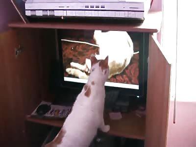 Cat Watches Birth Video