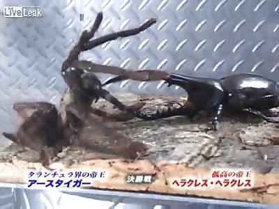 REAL JAPANESE MONSTER FIGHT