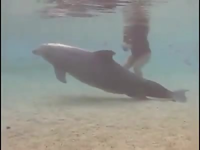 dolphin childbirth