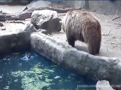 Bear lowers his bird