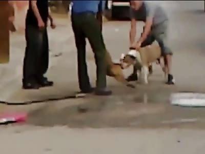 pit bull attack and kill small dog