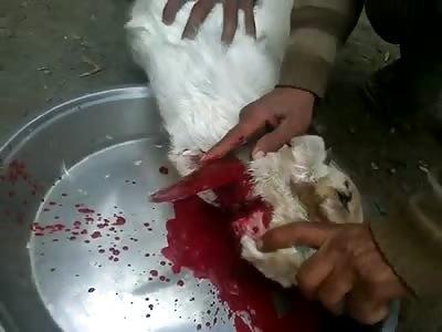 beheading a goat