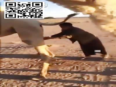 ABSURD: Muslims Drinking Camel Piss Causing DEADLY Virus Outbreak